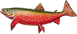 Arctic Char - Food Facts & Trivia