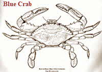 Blue Crab (B&W)