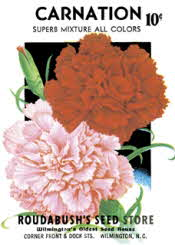 Carnations (edible flowers)