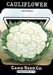 Cauliflower seed packet