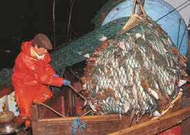 Overexploited Fisheries