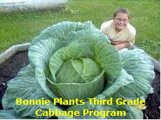 Kid with large cabbage