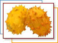African Horned Melon (Kiwano)