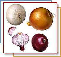 3 onion colors