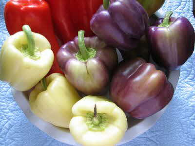 Sweet Pepper Colors