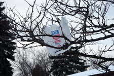 plastic bag in a tree