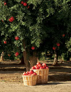 pomegranate tree and fruit baskets